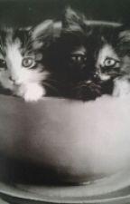 Avoir un chat by FloconPlume