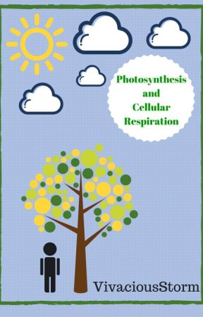 Photosynthesis And Cellular Respiration Diagram Of The