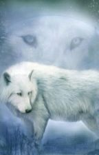 The Lone White Wolf  by LovelyDiamonds14320