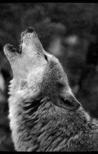 Simple Wolf by Juju1DD