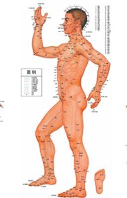 Dưỡng sinh theo quy luật vận hành 12 kinh lạc của cơ thể người