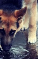 A Dog's Story: Max by dogseries