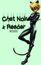 Chat Noir x Reader ~ Kitty and Mouse | ✔ by fandxmtrashed