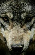 Мой волк парень?  by XseniyaWow