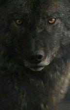 Ты моя волчица  by anastasia_joker_12