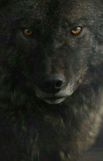 Ты моя волчица [Редактируется]
