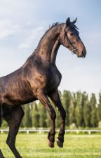 The last horse shifter owned by One Direction by Miamarizie