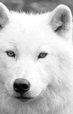 Mein Leben als Wolf by vogelfreund