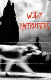 Wolf Intruders by CassedyKrumsee