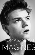 NEWT IMAGINES by Mazrulove16