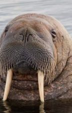 Walrus Smut by they_call_me_Gabriel
