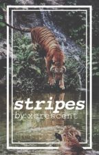stripes  by xcrescent