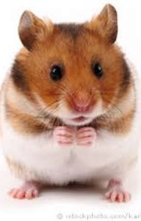 how my hamster died - It was a normal day - Wattpad