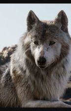 The Avenging Wolf (Avengers Fanfiction) by Winchester_Huntress