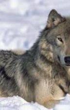 Azara, The Unwanted Wolf Pup: Chapter one: Mulan by bubbabeargumpwebkinz