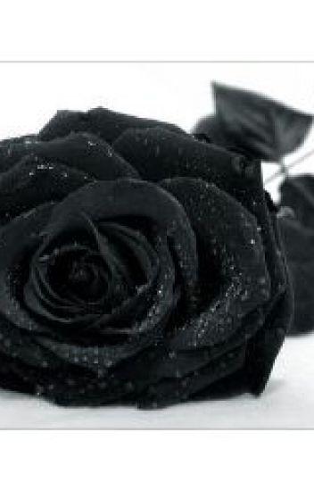 Black Rose (Draco Malfoy)