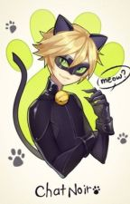 Falling for Agreste ~. Adrien/Chat Noir X Reader.~ |COMPLETED| (#Wattys 2016) by iiKrypticKookieii