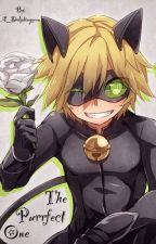 The Purrfect One -- Chat Noir X Fem Reader by A_Dolphinqueen