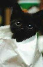 The Little Black Kitten by imapricklypear