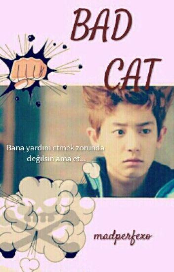 BAD CAT -bitti-