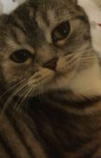 Selfies Of A Cat by SadieSelfies
