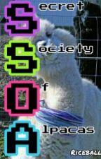 The (Very) Secret Society Of Alpacas // On Hold by awayx1000