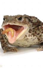 Chopstick Toad by xBvlletproofx
