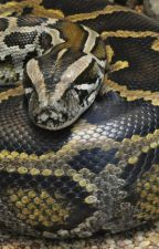 Larry the python - trilogies  by ShadowBlackRabbit
