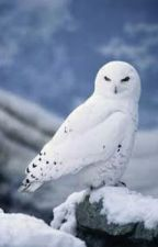 A White Owl's Tale by emilyandfudge