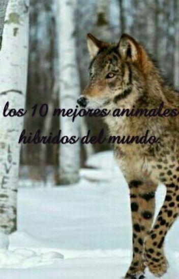Los 10 Mejores Animales Hibridos Del Mundo