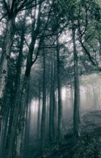 The Woods by TeamJetra