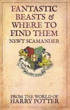 Fantastic Beasts & Where to Find Them by Arweven