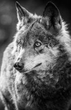 Stellar Wolf.    by Sirenitah