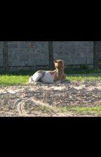Reiten und Pferde A-Z by love_pferde