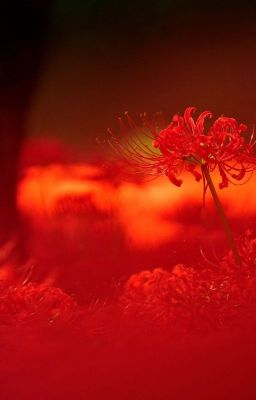 [ Kết-Giải, Bình-Yết, Nữ-Sư , Ngưu-Mã] Đóa hoa của thế giới ngầm