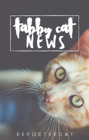 Tabby Cat News. 2.0