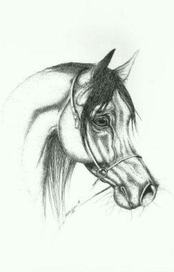 Moja Opowieść O Koniach