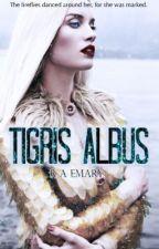 Tigris Albus by FrangarNonFlectar