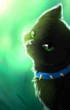 Warrior Cats Individual Rps by StarRuby