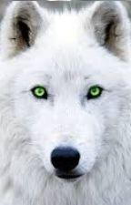 Biała wilczyca by Vesotia