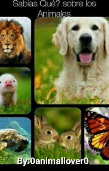 Sabías qué? Sobre Los Animales.