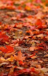 Dead leaves  by YdMartiz