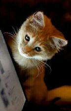 L'Univers Des Chats - LGDC - Warriors Cats by Mangasuna
