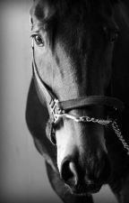 Ló szenvedély by Adropintheocean28