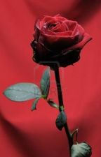 A Pretty, Perfect, Plastic, Red Rose by LilyBrooks