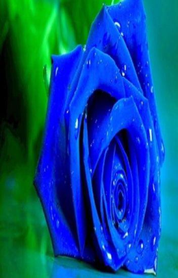 BLUE ROSE ცყ  cɧɛყɛŋŋɛ ɬriɠɠ