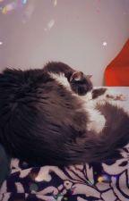 My Cat Chewie by StarwarsLuv