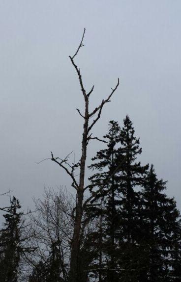 Chimera of Wood and Bone. by somebodi_else