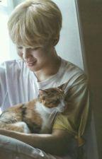 Meow,idiot • Yoonmin by bangtansexuall