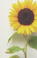 Sunflower~ Looking at You~ by ShinRui4